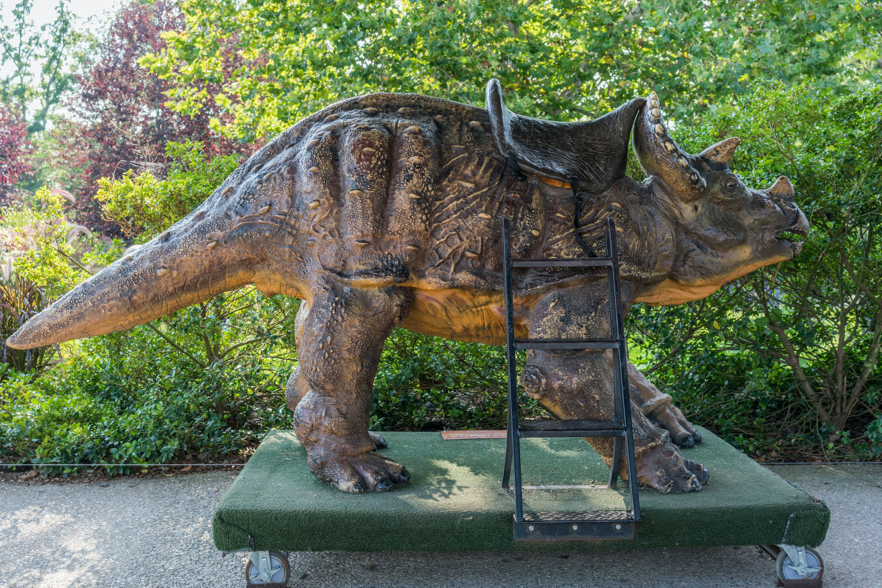 A dinosaur model on wheels with a saddle stands outside the Creation Museum in Petersburg, Kentucky.