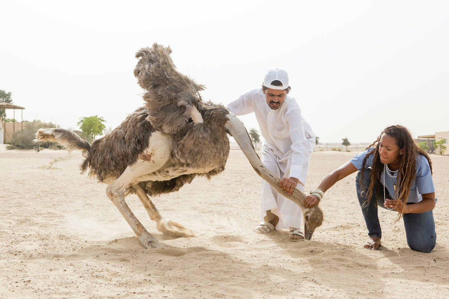 The Veterinarian to UAE Royalty's Exotic Pets | Topic