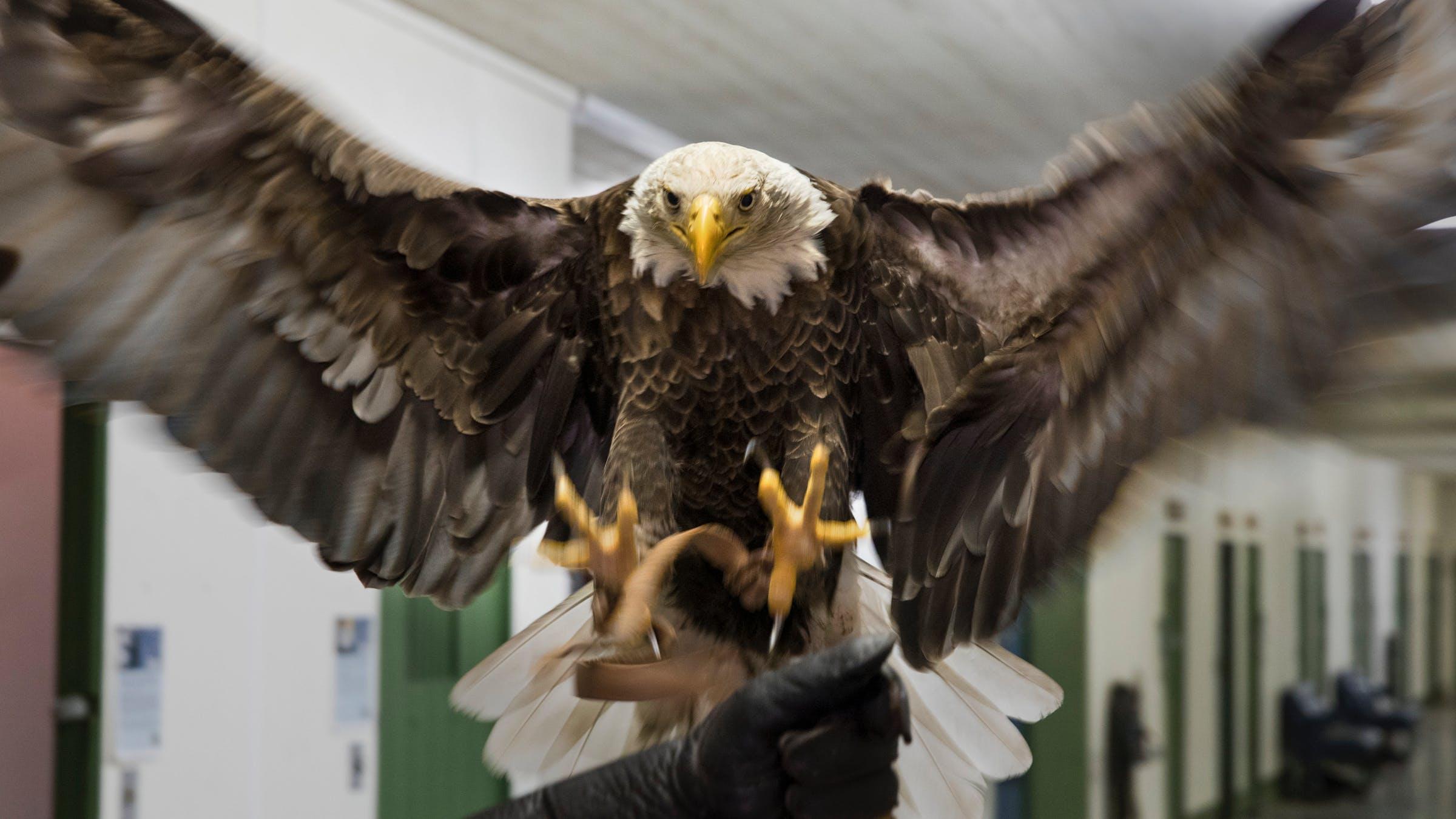 Details about  /American Flag Bald Eagle Set