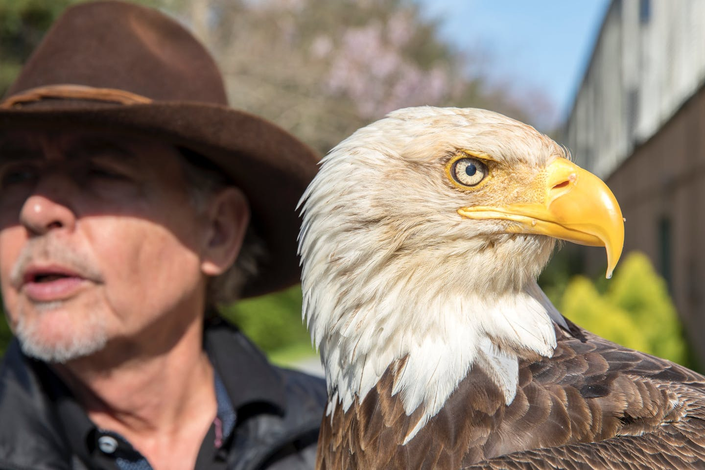 Bald Eagles in Captivity: Challenger the Bald Eagle | Topic